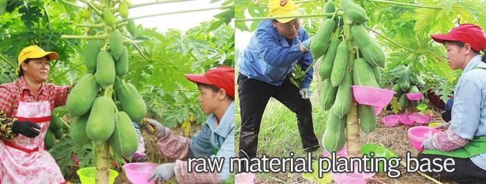 原料种植基地